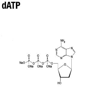 Deoxynucleotide triphosphate (solution), peqGOLD