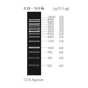 DNA ladder, 1 kb, peqGOLD
