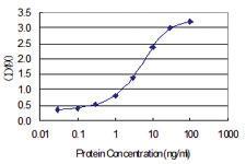 Anti-IDO1 Polyclonal Antibody Pair